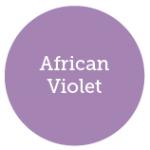 African Violet 2013